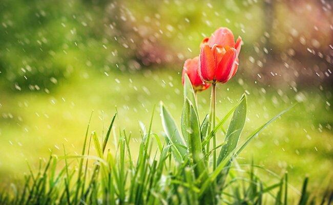 """Sabah yağış yağacaq, külək əsəcək <b style=""""color:red""""> </b>"""