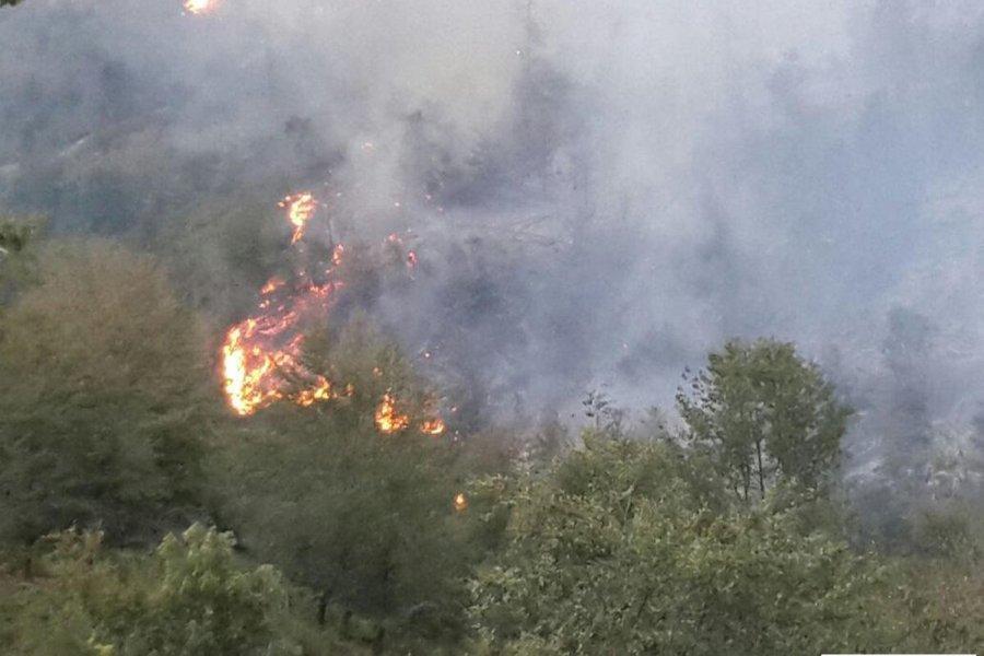 Türkiyədə 180 meşə yanğınının qarşısı alınıb