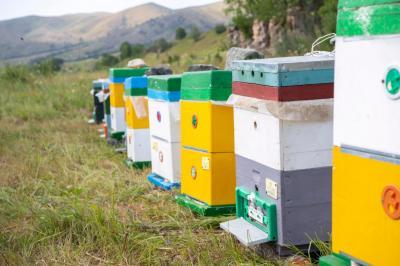 Arıçılıq təsərrüfatları Laçın yaylaqlarına köçürülüb